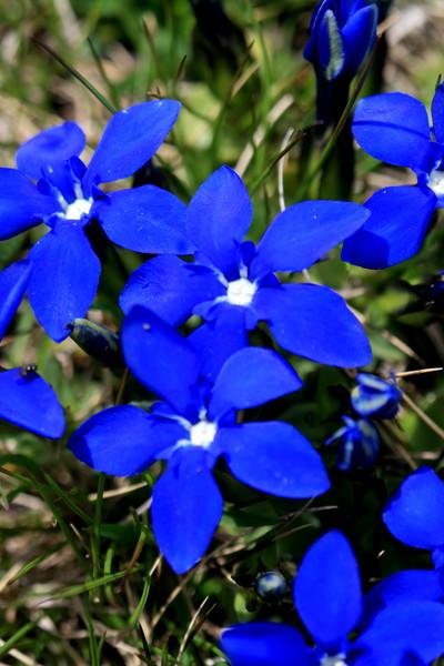 Bluebrights.jpg