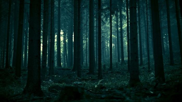 forest-6.jpg